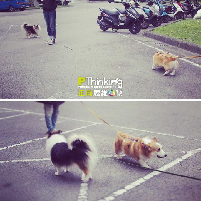 狗兒的對話 – 安定訊號及社交散步