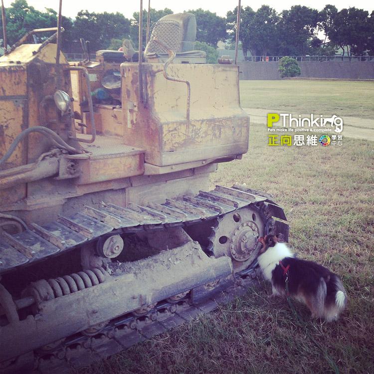 讓狗兒有好奇心
