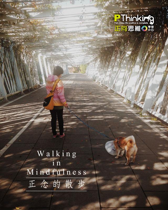 正念的散步
