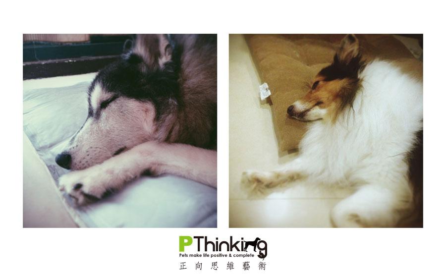 幫你的狗兒準備一個枕頭吧!