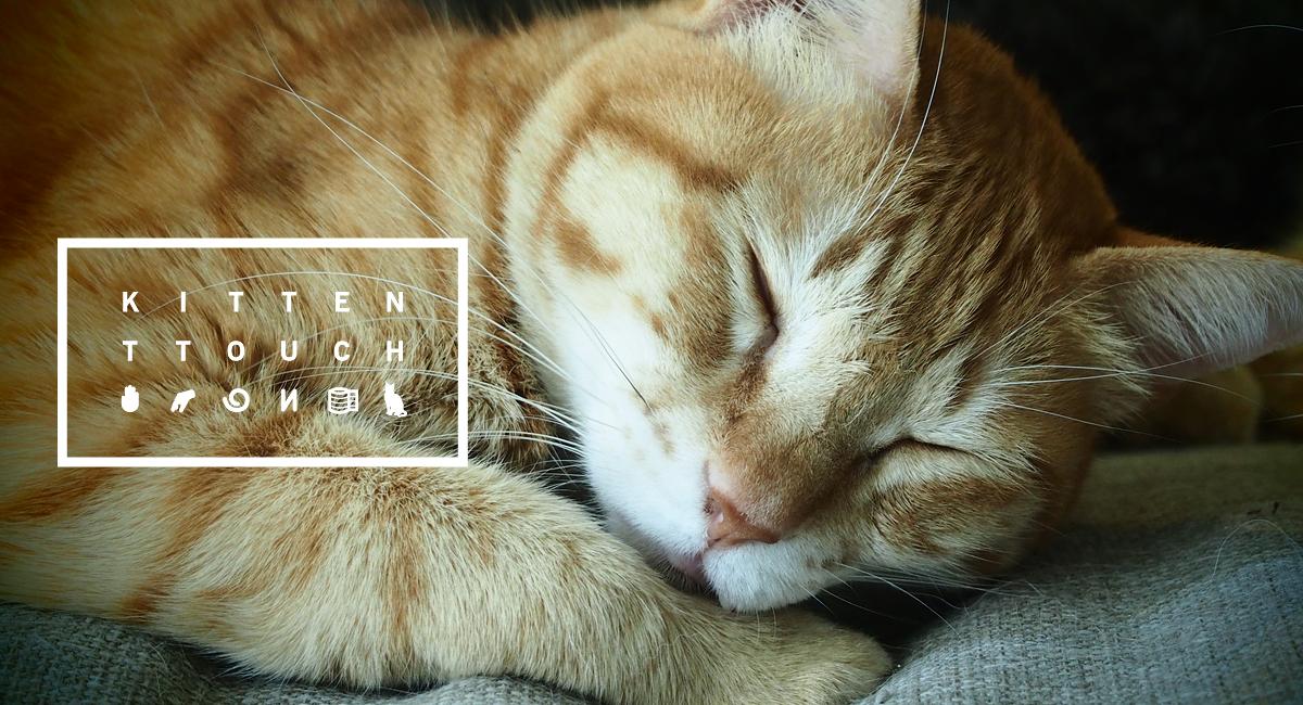 貓咪TTouch療癒